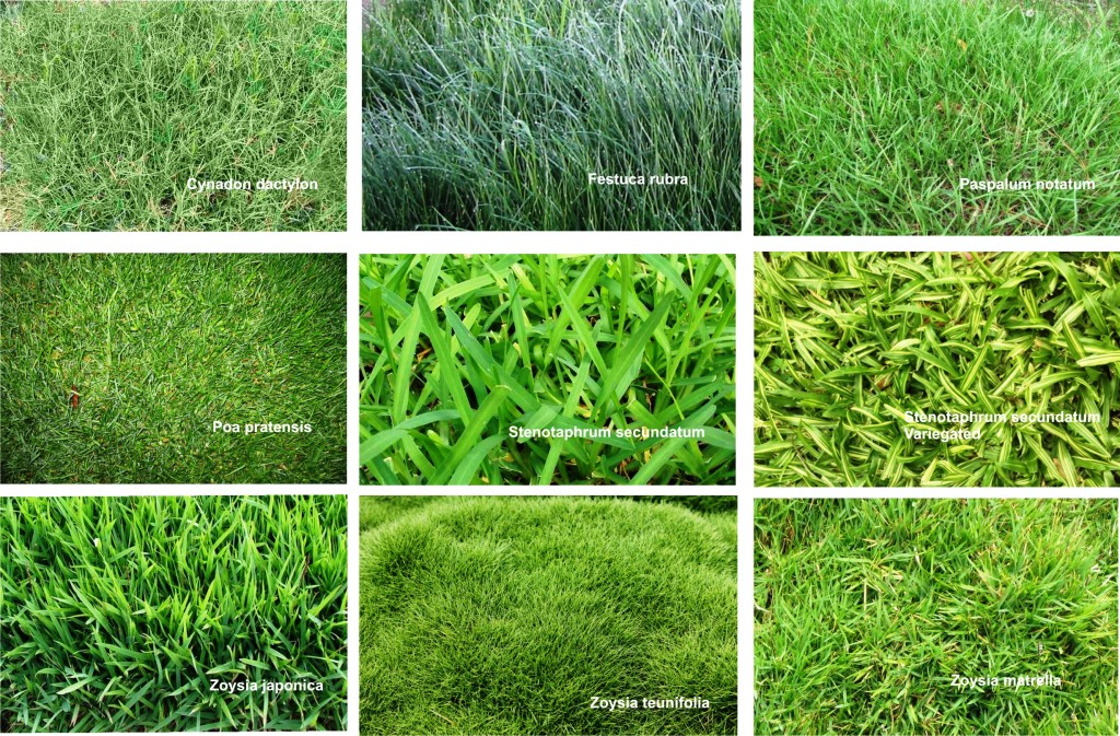 How To Take Care Of Lawn Or Turf