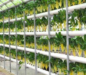 Types of Vertical Farming