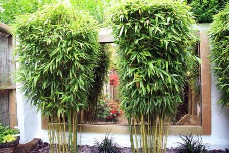 Benefits of Bamboo in Carbon Control